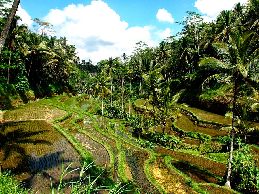 Escaleras de arrozales en Bali