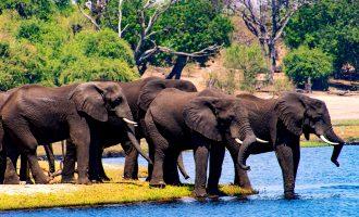 Un día de safari en África con los cinco grandes