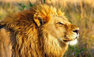 Botsuana, el safari más íntimo y exclusivo de África