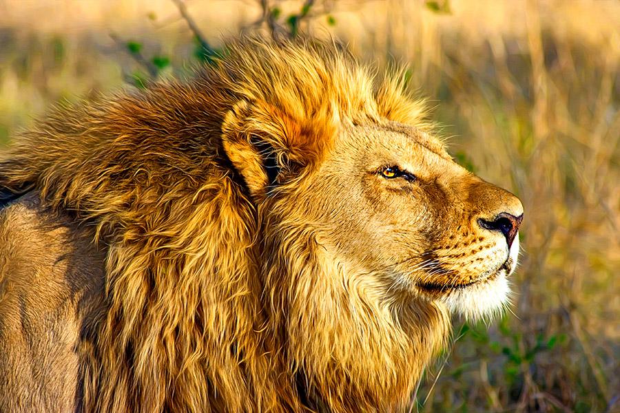 Safaris en Botsuana exclusivos