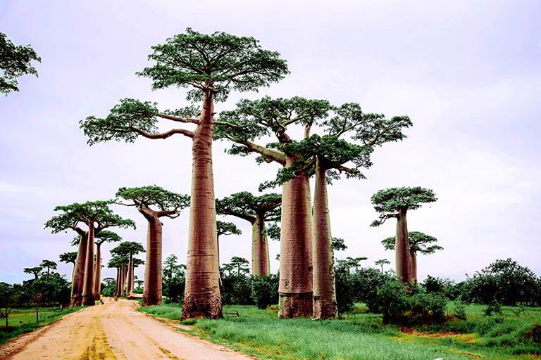 ¿qué ver en Madagascar?