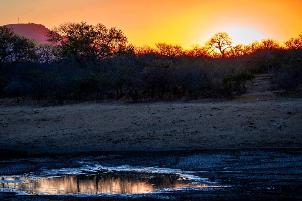 amanecer en un safari africano