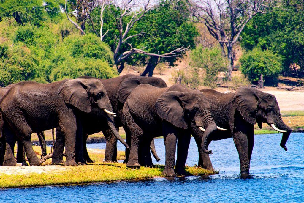 Safari en Africa y naturaleza